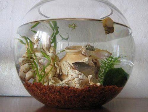 Акваріум - з чого почати розведення рибок в домашніх умовах