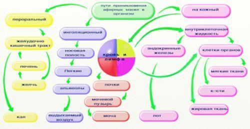 Ароматерапія в домашніх умовах - ази і корисні рекомендації