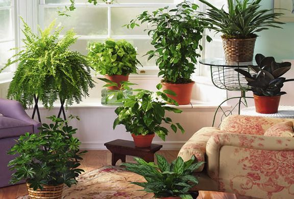 Домашнє квітникарство: хобі для любительок затишку і кімнатних рослин