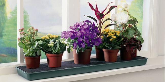 Позбавлення від цвілі в квітковому горщику