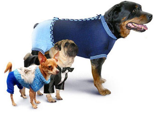 Виготовлення одягу для тварин - хобі з подвійною користю