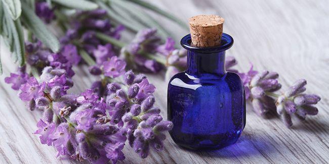 Ефірна олія лаванди: властивості і застосування