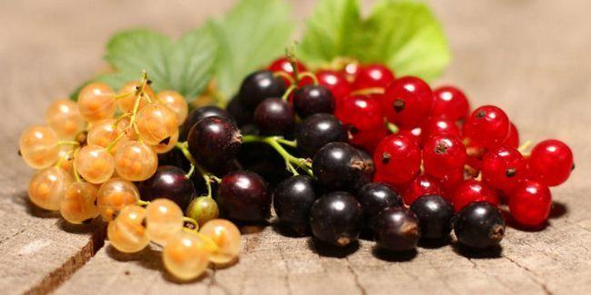 Джерело вітамінів: користь смородини