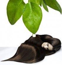 масло чайного дерева для волосся
