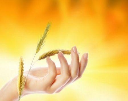 Масло паростків пшениці для обличчя
