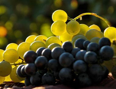 Чи можна виноград вагітним? Відповідь неоднозначна