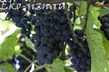 Корисні властивості винограду. Вінограданая дієта