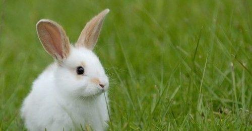 Розводимо кроликів в домашніх умовах - облаштування клітини