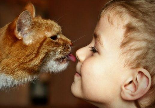 Поради щодо вибору домашніх тварин для дітей - огляд і опису всіх варіантів