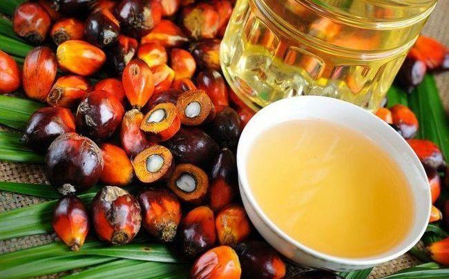 Шкода і користь пальмового масла, їсти чи не їсти