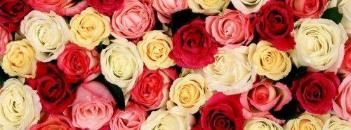 Вирощування троянд з насіння в горщиках